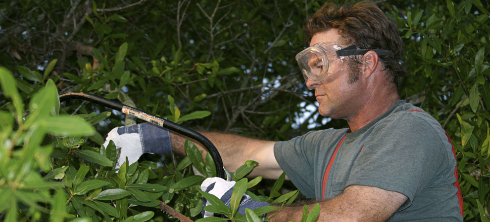 About Above The Ground Tree Care LLC