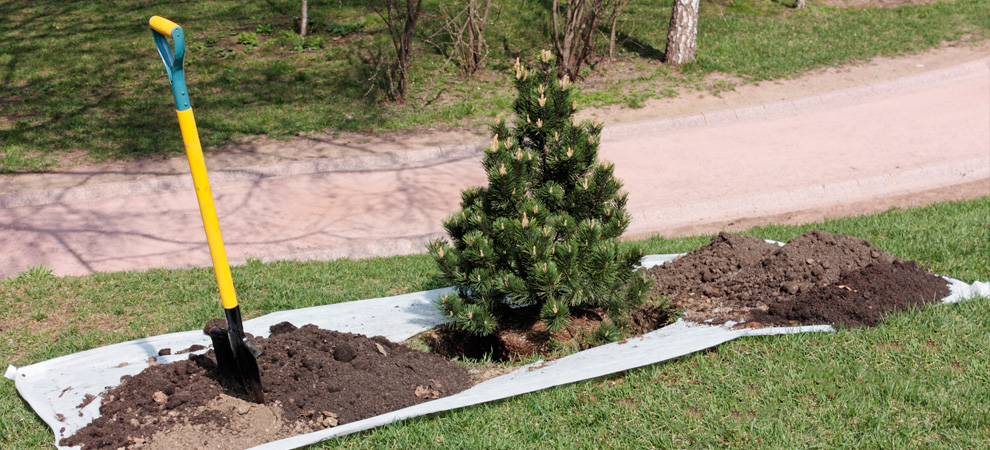Fairfield Tree Planting