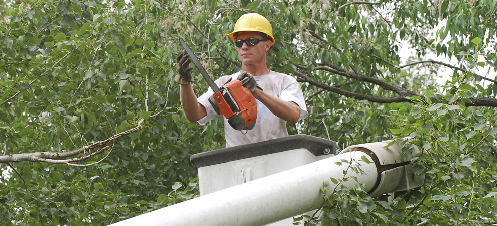 West Haven Tree Service